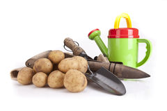 Watering can,potatoes and gardening tools Stock Image
