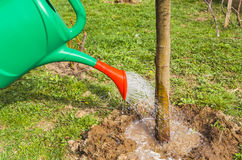 Watering can pouring water on tree. Watering can pouring water at tree base from garden Stock Photography