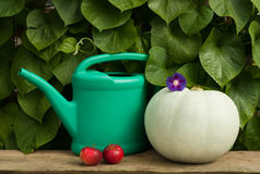 Watering Can, Red Apples And Ripe Pumpkin Royalty Free Stock Photo