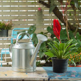 Watering can and Red Bromeliad Plant Royalty Free Stock Image