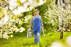Watering can spade cherry tree gardener Stock Image