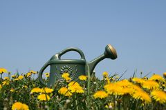 Watering-can in spring field Stock Image