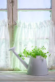 Watering can standing in a sunny window with herbs Stock Photo