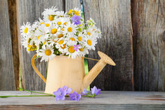 Watering can with summer daisies flowers on wooden background