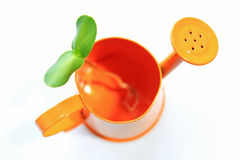Watering can and sunflower sprout Royalty Free Stock Photography