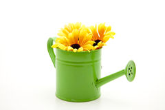 Watering can with sunflowers Stock Image