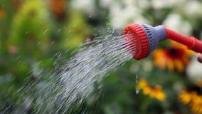 Watering stock video footage