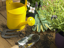 Watering Can And Trowel Next To Plants royalty free stock images