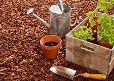 Watering can, trowel and seedlings over mulch Royalty Free Stock Images