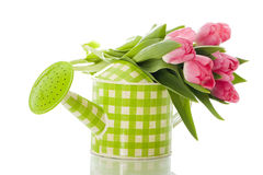 Watering can with tulips. Isolated on white background stock image