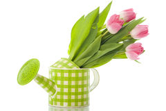 Watering can with tulips. Isolated on white background stock images