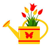Watering can and tulips Royalty Free Stock Images
