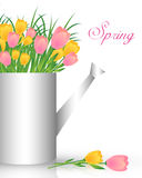 Watering can with tulips Stock Photos