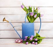Watering can with tulips Royalty Free Stock Images