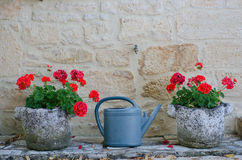 Watering can. Between two planters full of geraniums stock photos