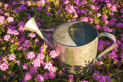 Watering can under the sunshine Royalty Free Stock Photography