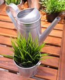 Watering Can or Watering Pot with Green Plant Royalty Free Stock Photos
