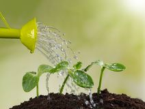 Watering can watering young plants Stock Images
