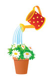 Watering can waters flowers in a pot. Vector illustration Stock Photography