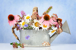 Watering can with wildflowers Royalty Free Stock Photos