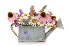 Watering can with wildflowers Stock Images
