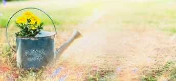 Watering can with yellow garden flowers on outdoor nature background with grass, banner Royalty Free Stock Photos