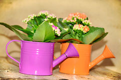 Watering cans with colorful flowers Stock Photography