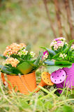 Watering cans with colorful flowers Stock Photos