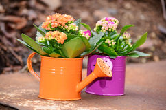 Watering cans with colorful flowers Royalty Free Stock Photos