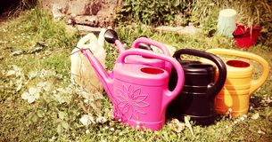 Watering cans in various colors standing in a group on green grass a sunny summer day. stock photos