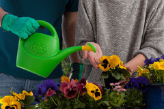 Watering colorful flowers Stock Images