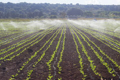 Watering commercial field Stock Photo