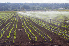 Watering commercial field Stock Image