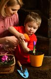 Watering concept. Little child watering spring flower with mother. Mother and son hold watering spray gun together. Watering plant by hand royalty free stock images