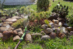 Watering conifers in the garden. On the Alpine hill stock photos