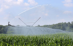 Watering Corn Royalty Free Stock Photography