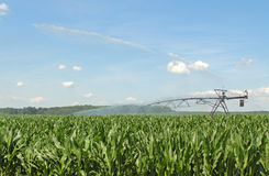 Watering Corn Crop Royalty Free Stock Images