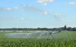Watering Corn Crop Royalty Free Stock Photo