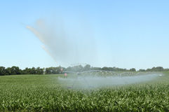 Watering a Corn Crop Stock Photo