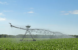 Watering Corn Crop Royalty Free Stock Photos