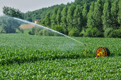 Watering in a corn field in Proissans in Perigord Royalty Free Stock Photos