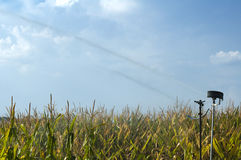 Watering the corn plantation Royalty Free Stock Images