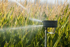 Watering the corn plantation Stock Photos