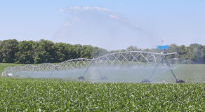 Watering Corn Plants Stock Photo