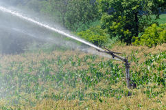 Watering Corn Stock Images