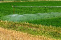 Watering a Crop Stock Image