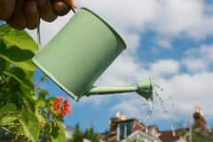 Watering the crop. A small hand held watering can being held aloft against an urban garden scene.Water emerging from spout of watering can. Landscape format Stock Photos