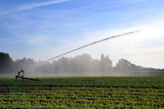 Watering crops. In time of drought the crops need to be watered by an irrigation system Royalty Free Stock Image