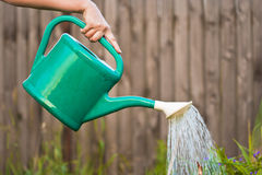 Watering the crops. Woman hand with watering can watering the crops Stock Photos