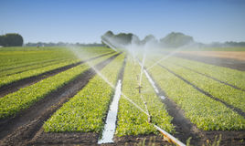 Watering crops Royalty Free Stock Images